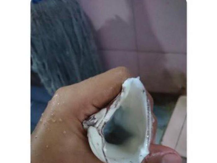 Cumi Jadi Bahan Masturbasi Trending Twitter, Netizen: Jadi Kapok Makan Cumi!