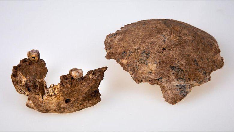 Israel temukan jenis baru manusia purba, diduga nenek moyang Neanderthal