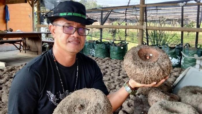 Jadi Petani Porang, Pria Ini Dapat Omzet Rp 800 Juta/Hektare