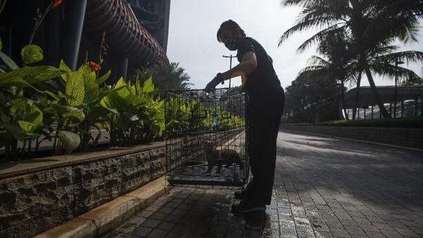 Meski JAQS tutup sementara saat PPKM Mikro di Jakarta, pengelola tetap melakukan perawatan satwa-satwa koleksinya dan membersihkan ruangan secara berkala sesuai protokol pencegahan penyebaran COVID-19.