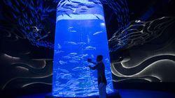 Ikut PPKM Mikro, Jakarta Aquarium Tutup Sementara
