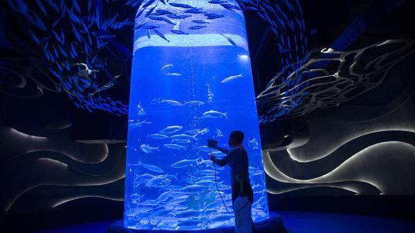 Sementara itu, kaca akuarium dibersihkan cairan disinfektan.