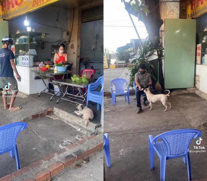 Gemes Banget! Anjing Imut Ini Jadi Kasir Sekaligus Pelayan di Restoran