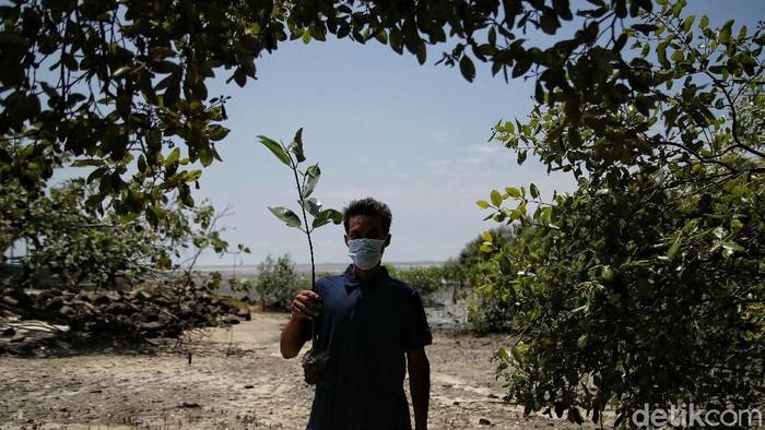 Pantai Sejarah pernah alami abrasi besar-besaran imbas penjualan pasir kuarsa. Warga pun turun tangan menjaga kelestarian pantai dengan menanam pohon mangrove.