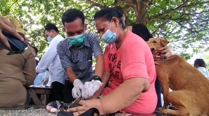 Peliharaan Warga di Medan Divaksin Rabies Imbas Bocah Tewas Digigit Anjing