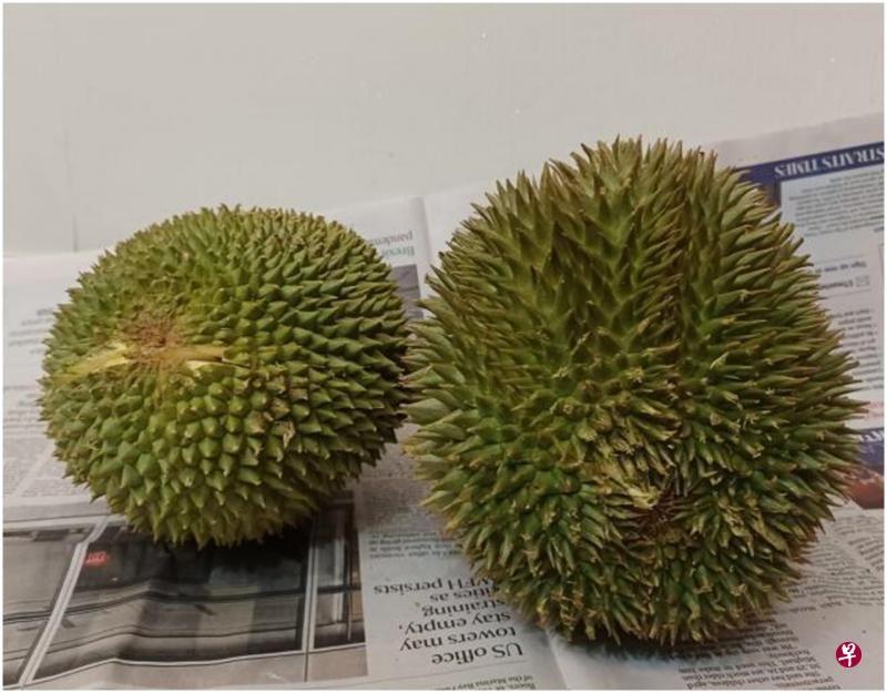 Waduh! Penjual Durian Tipu Pembeli  dengan Durian Black Thorn 'Palsu'