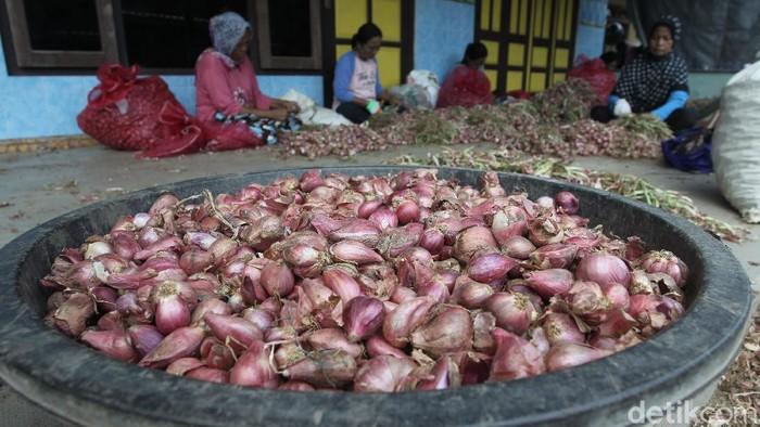 Harga bawang merah di Bantul turun dari Rp 32 ribu menjadi Rp 22 ribu. Penurunan harga itu diketahui terdampak anomali cuaca.