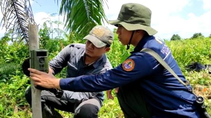 Petugas BKSDA pasang camera trap di lokasi pria tewas diterkam harimau (dok. BKSDA Riau)