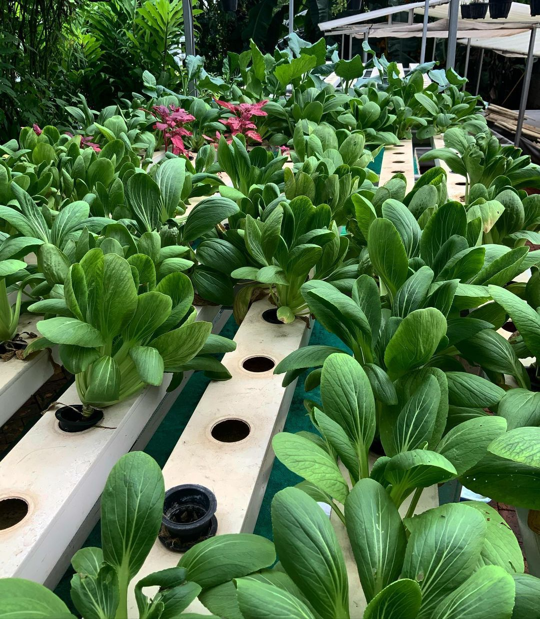Kebun Ide di Bintaro