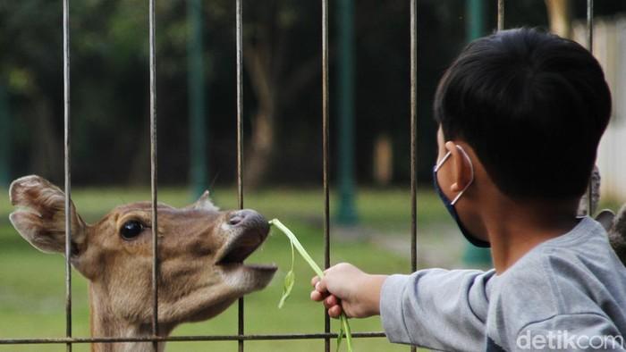 Di tengah pandemi Corona, sejumlah warga masih nekat memberi makan rusa di halaman depan Taman Balekambang yang sudah ditutup.