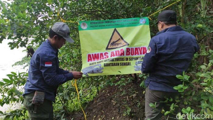 Balai Konservasi Sumber Daya Alam (BKSDA) Jatim kembali mendatangi lokasi penampakan buaya di Sungai Bengawan Solo. Tepatnya di Desa Parengan, Kecamatan Maduran.