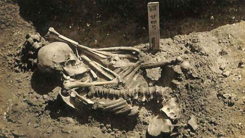 Kerangka 3.000 Tahun Korban Hiu