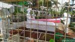 Momen Pemakaman Rachmawati Soekarnoputri di TPU Karet Bivak