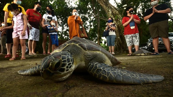 Kegiatan melepaskan binatang ke alam bebas sesuai dengan habitatnya itu disebut sebagai Fang Sheng.