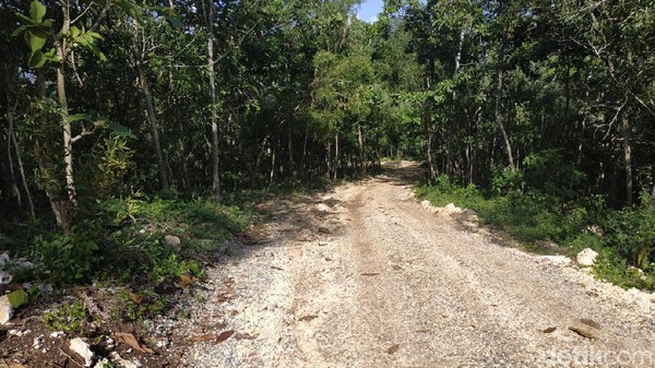 Berikutnya perjalanan menuju pantai dilanjutkan dengan jalan tanah. Akses jalan hingga saat ini masih dalam tahap penyempurnaan. Dari sekitar 2 kilometer jalan desa, baru separuh yang dilapisi cor. (Purwo Sumodiharjo/detikTravel)