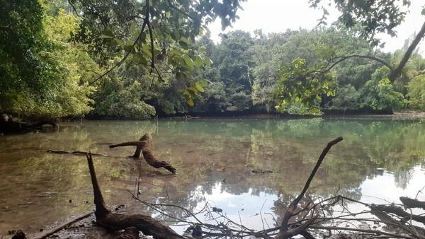 Telaga Mambekora terletak di bagian barat daya Pulau Kapotar. Telaga ini berair asin tapi jernih. Di telaga ini hidup spesies endemik. Warga lokal menyebutnya sebagai kerang tatoiri. (Hari Suroto/Istimewa)