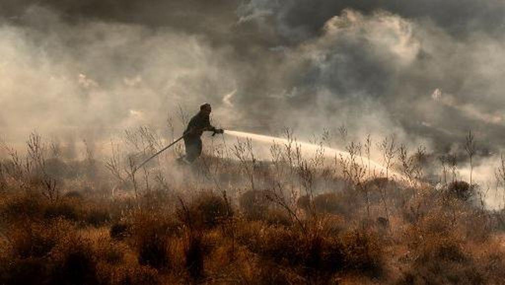Jejak Mengerikan Kebakaran Hutan di Siprus
