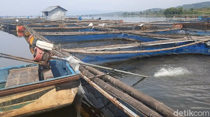 Pertanian karamba di Waduk Gajah Mungkur, Wonogiri, Jawa Tengah.
