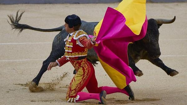 Banteng sudah menjadi bagian dari budaya bagi masyarakat Spanyol sejak zaman Romawi. Masyarakat yang tinggal di Iberia sering kali mengunjungi sirkus-sirkus untuk melihat pertarungan antara seorang gladiator melawan seekor binatang, salah satunya banteng.