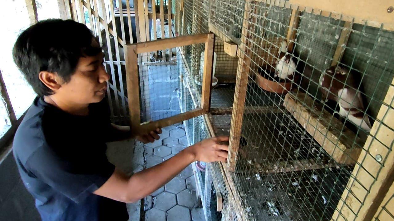 Koleksi merpati hias impor di tempat peternakan merpati hias milik Ambar Wahyudi di Dusun Carikan, Kalurahan Bumirejo, Kapanewon Lendah, Kulon Progo