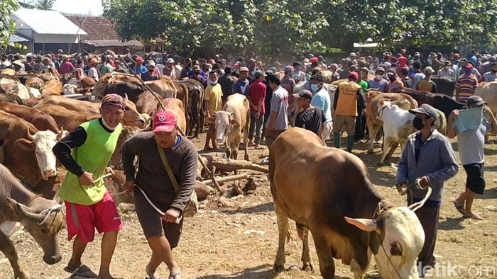 Menjelang Idul Adha, Pasar Hewan Kajen Pekalongan terpantau ramai hari ini. Keramaian itu terjadi saat PPKM darurat sedang diberlakukan di Jawa-Bali.