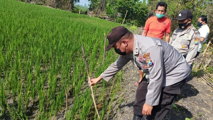 Senjata makan tuan. Barang kali itu peribahasa yang tepat untuk menggambarkan nasib Marianto (52). Petani di Desa Rejoagung, Kecamatan Ploso, Jombang ini tewas tersetrum jebakan tikus listrik yang ia pasang di sawahnya sendiri.