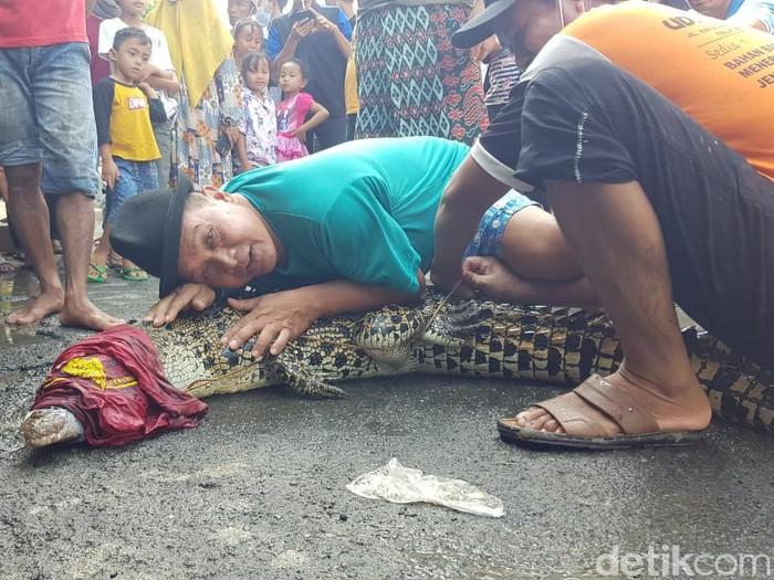 Masih ingat dengan penampakan buaya muara di bantaran Sungai Bengawan Solo, Desa Parengan, Kecamatan Maduran, Lamongan? Salah satu buaya sudah ditangkap warga.