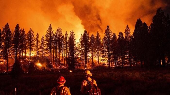 Kebakaran hutan kembali menghanguskan hutan di California. Bahkan kebakaran tahun ini terjadi lebih luas dibandingkan dengan tahun 2020 lalu.