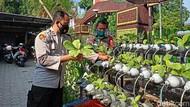 TNI/Polri di Ponorogo Tanam Sayur Hidroponik, Hasilnya Dibagi ke Warga Isoman