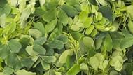 5 Sayuran Hijau Ndeso Ini Punya Nutrisi Penting Untuk Jaga Imunintas