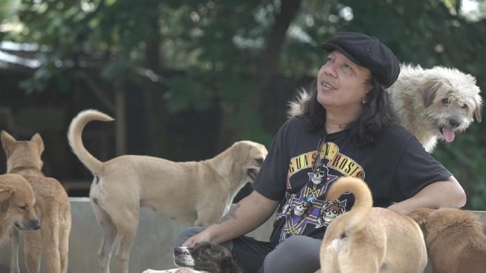 Doni Herdaru Tona (43), lulusan sarjana Akuntansi ini justru mendirikan shelter yang diberi nama Animal Defenders Indonesia di tahun 2011