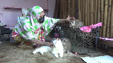 Wanita Berhati Mulia di Lumajang Punya Panti untuk Kucing Telantar