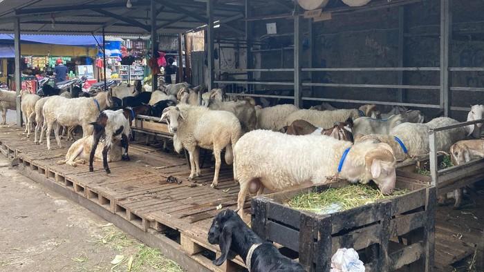 Suasana di Pasar Kambing Tanah Abang pada Sabtu (10/7/2021)