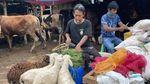 Potret Pedagang Hewan Kurban Pasar Tanah Abang di Masa PPKM Darurat