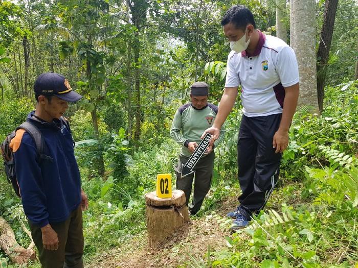 illegal logging di trenggalek