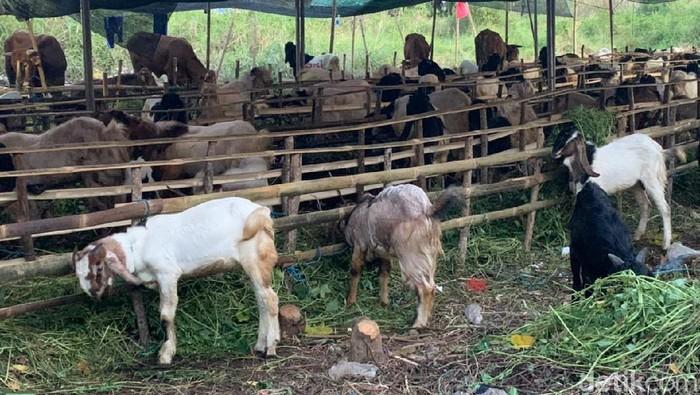 hewan kurban di surabaya