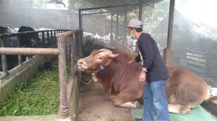 Pedagang hewan kurban di Jambi (Ferdi-detikcom)