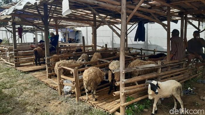 Pedagang hewan kurban kesulitan berjualan di masa pengetatan