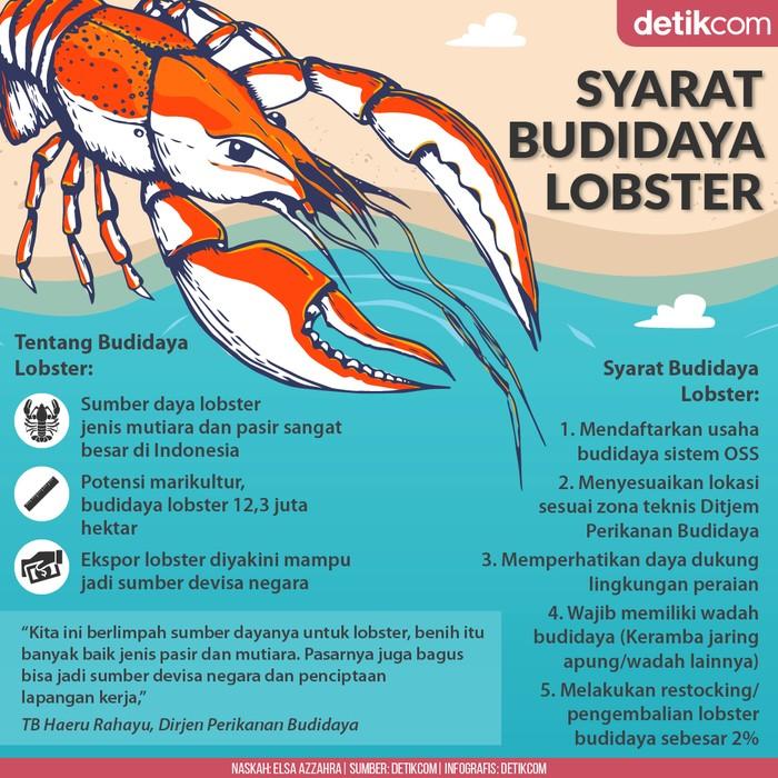 Syarat Budidaya Lobster