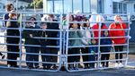 Kasian, Anak Paus Orca Terdampar di Selandia Baru