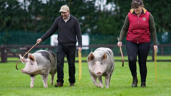 Pengunjung sangat antusias menghadiri hari pertama Pertunjukan Great Yorkshire ke-162 di Harrogate Showground, Inggris.