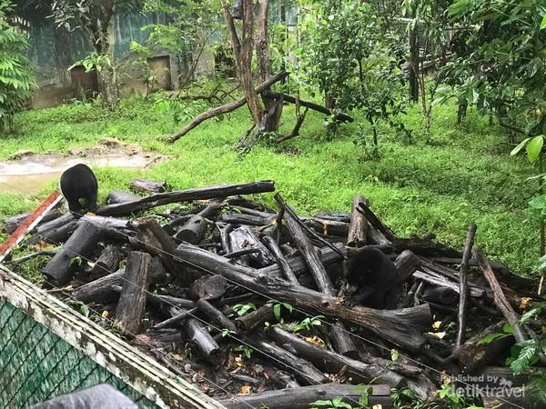 Terdapat setidaknya enam ekor beruang madu yang dikonservasi di KWPLH