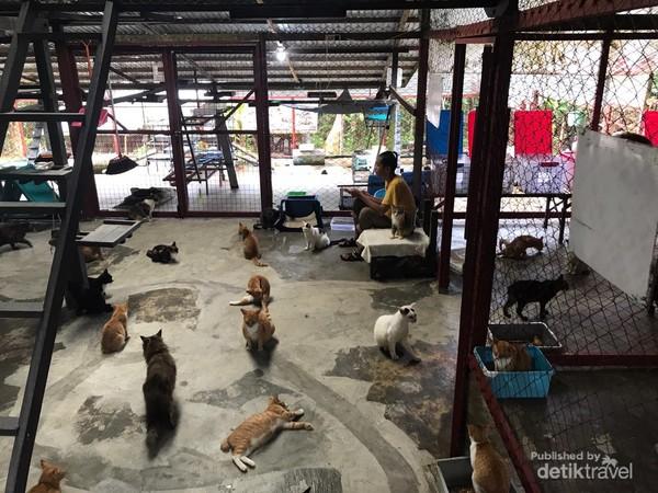 Kucing dan anjing juga menjadi hewan yang dipelihara di KWPLH