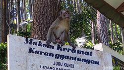 40 Ekor Monyet di Karang Gantungan, Tidak Pernah Nambah atau Berkurang