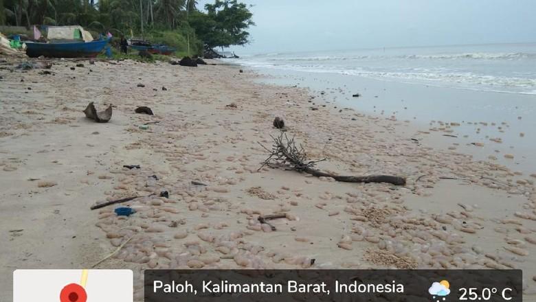 Pantai Venesia Sambas, Kalimantan Barat