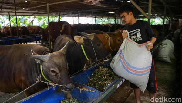 Kampung 99 Pepohonan ini ada sejak 2002. Ini showroom sebagai peternakan dan penggemukan sapi. Selain ini terdapat lima peternakan dan penggemukan di seluruh Jawa.
