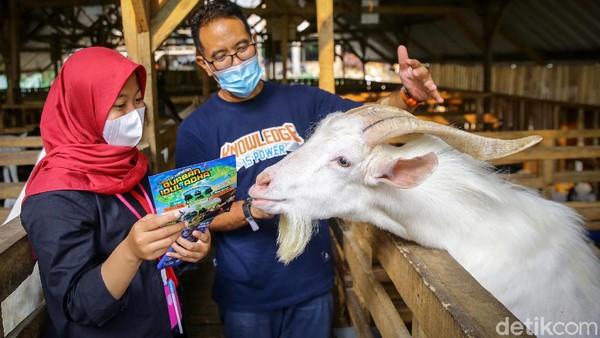 Kambing dan sapi ditawarkan dengan beragam harga dan ukuran.