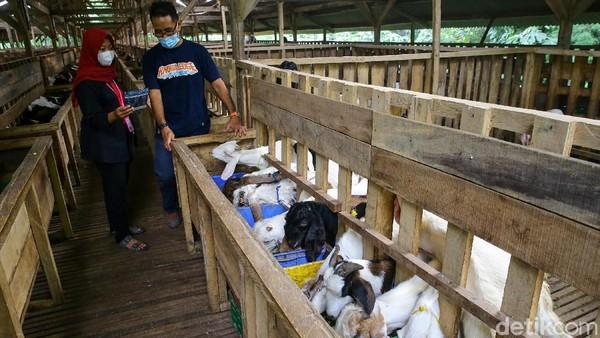 Memilih hewan kurban pun menjadi lebih nyaman karena tempatnya yang bersih.