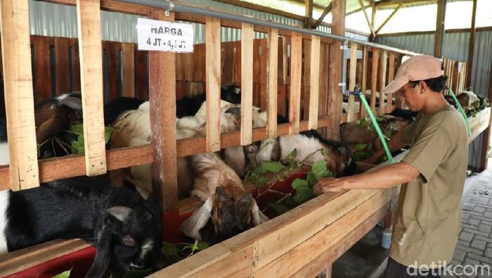 minimarket kambing