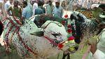 Sibuknya Pasar Hewan Kurban di Pakistan Kala Pandemi